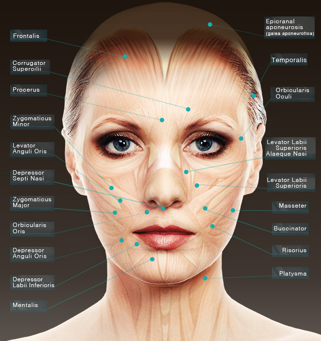 Facial plastic surgeon Dr. Stanley Jacobs offers BOTOX® for San Francisco Bay Area patients, using his knowledge of facial anatomy to deliver superior results.
